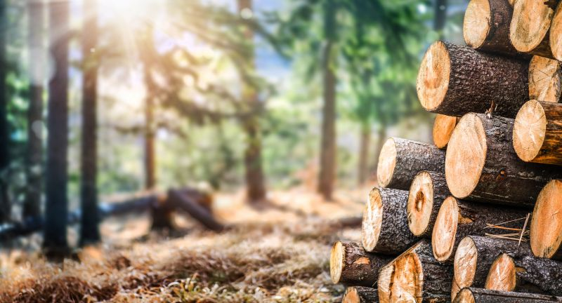 timber, log, wooden, tree, wood, pile, cut, forest, texture, resource, nature, natural, lumber, stacked, stack, stock, logging, material, pine, woodpile, rural, forestry, background, round, trunk, heap, brown, raw, firewood, bark, rough, winter, green, many, manufacturing, birch, plant, sawmill, circle, fuel, piled, construction, energy, ecology, storage, outdoors, pattern, environment, industrial, industry, timber, log, wooden, tree, wood, pile, cut, forest, texture, resource, nature, natural, lumber, stacked, stack, stock, logging, material, pine, woodpile, rural, forestry, background, round, trunk, heap, brown, raw, firewood, bark, rough, winter, green, many, manufacturing, birch, plant, sawmill, circle, fuel, piled, construction, energy, ecology, storage, outdoors, pattern, environment, industrial, industry